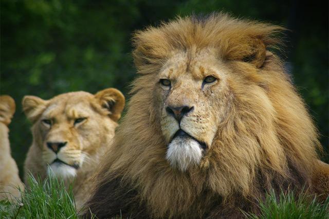 sfdc_lions_1512.jpg