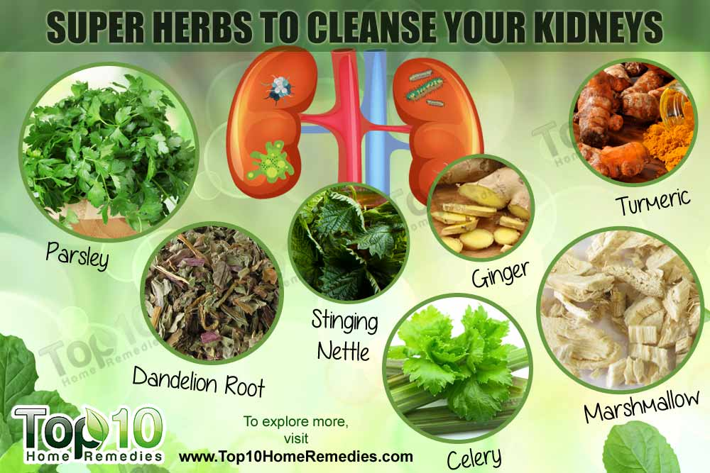 The 10 Best Herbs For Kidney Cleansing Shareable Snippets